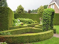 Het aan te passen stukje tuin.